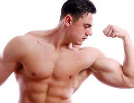 Desarrollo Musculatura